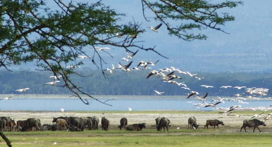 Lake Nakuru National Park, Kenya: View of Lake Nakuru