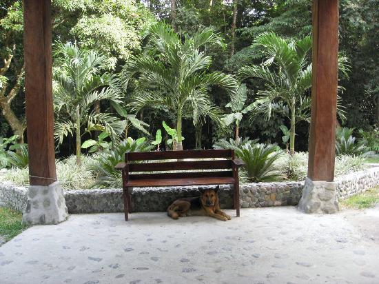Casa Cangrejal B&B Hotel: Taz in the front yard