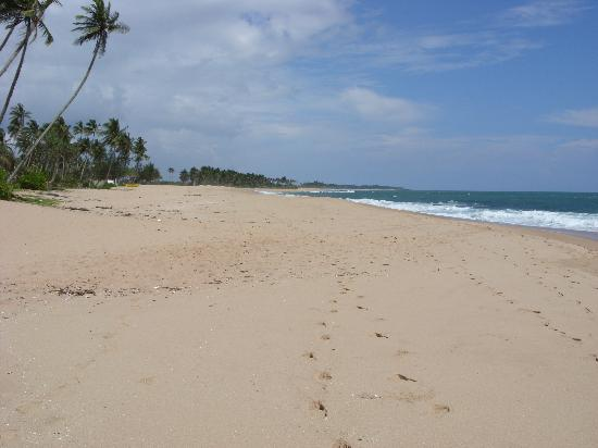 Tangalle, ศรีลังกา: Beautiful empty beaches in Tangalla