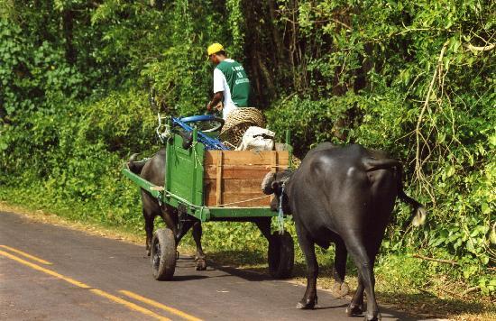 Bundesstaat Para: Una strada di Sourè
