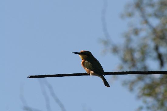 Okavango Delta, Botswana: birdwatching