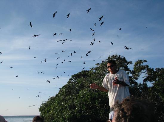 Thatch Caye Resort: Chico at Bird Key