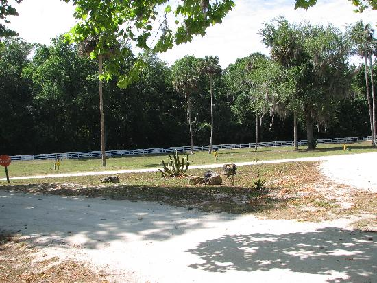 Bulow RV Resort: Large Open Grounds