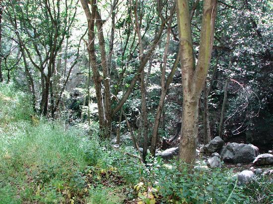 Big Santa Anita Canyon 사진