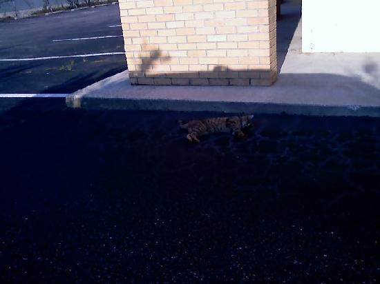 Knights Inn Lumberton: Dead Cat in the Driveway!