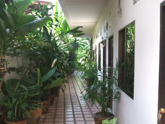 Red Hibiscus Guesthouse: Way to rooms
