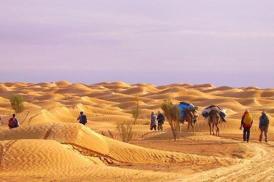 Sahara Desert : sand sea forever