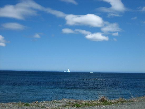 Irish Loop: icebergs-fermeuse
