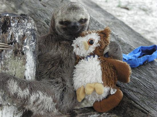 Ariau Amazon Towers Hotel: baby sloth with the Trip Advisor Owl!