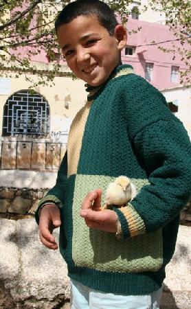 Sefrou, Morocco: Child and Chick