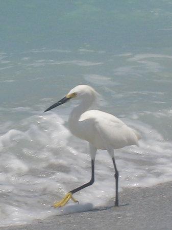 Νήσος Καπτίβα, Φλόριντα: birdie