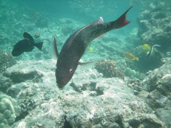 K bay fish picture of island of hawaii hawaii tripadvisor for Hilo fish company