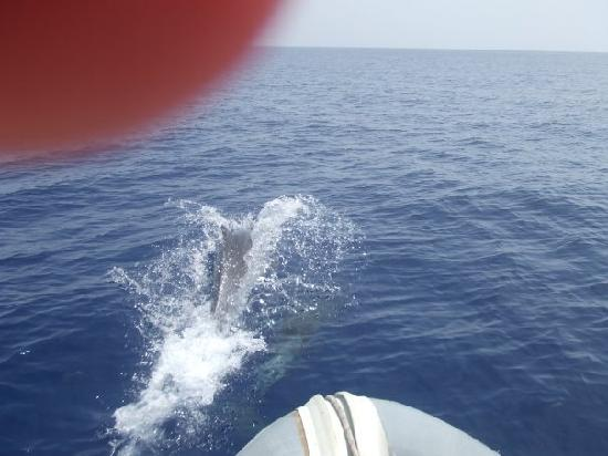 Dolphin Boat Safari: dolphins