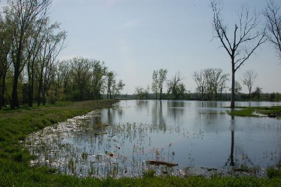 Mound City, MO : wetlands