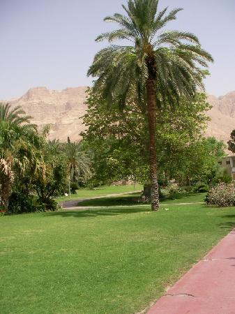 Kibbutz Ein Gedi : green oasis in the desert