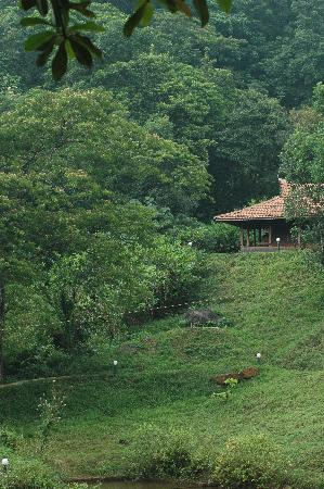 Rain Country Resorts: Resort grounds and cottage