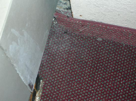 Hampton Inn North Myrtle Beach - Harbourgate: Cobwebs and Dirt