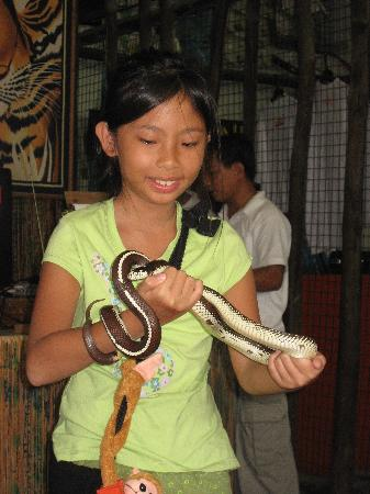 Legenda Suites: Petting a Snake