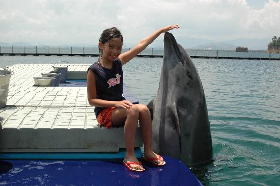 Legenda Suites: Close Encounter with a Dolphin