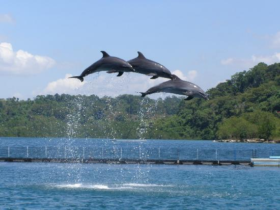 Legenda Suites: Dolphin Show