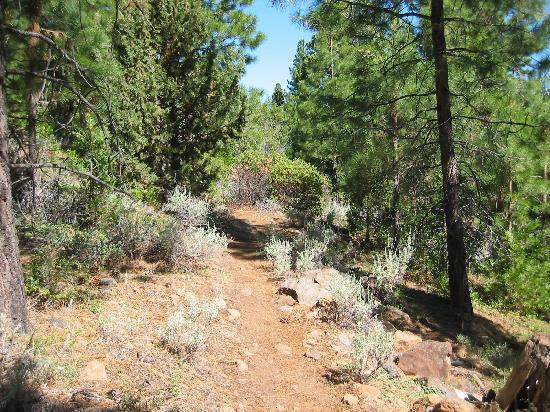 Sierra Hot Springs Resort & Retreat Center: Rustic Trail