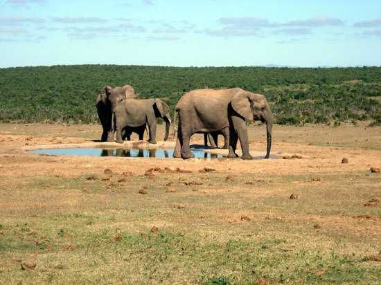 Addo Elephant National Park 사진
