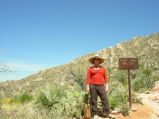 Mon Ami Bed and Breakfast: Beware of the bighorn sheep in Catalina State Park...