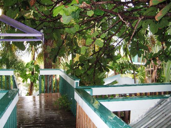 Lajas, Puerto Rico: Parador la Jamaca