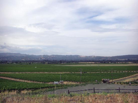 Schug Carneros Estate Winery : Photo of the vineards