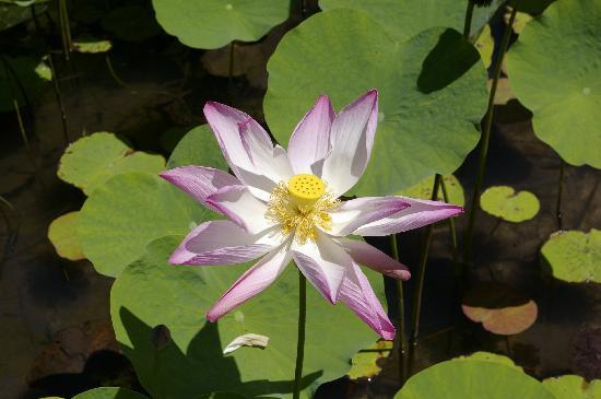 Muri Beachcomber: The gardens