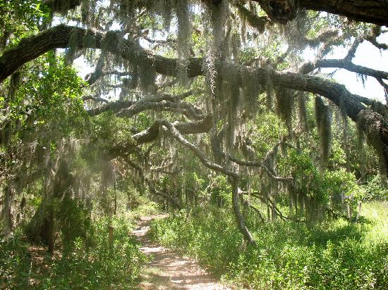 Little Talbot Island State Park: trail from the campground