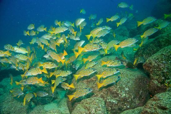 Isla de Coiba, Panama: Abundancia de Vida Marina
