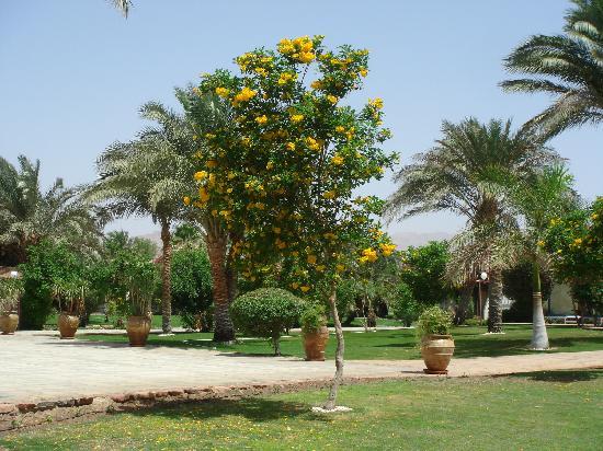 Ibis Styles Dahab Lagoon: grüne gepflegte Anlage