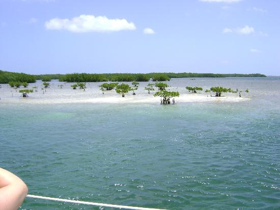 Cayo Blanco-Catamaran Trip
