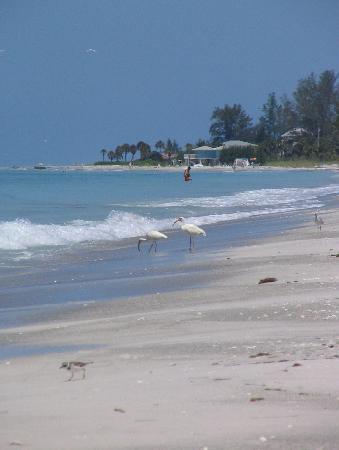 Cabana Beach Club Updated 2018 Prices Inium Reviews Longboat Key Fl Tripadvisor