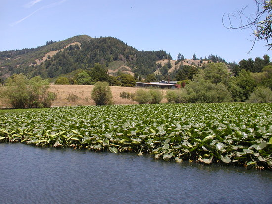 Duncans Mills, CA: The duck pond at Casini