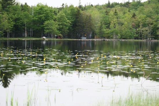 Mountain Top Cottages & Campground : The lake
