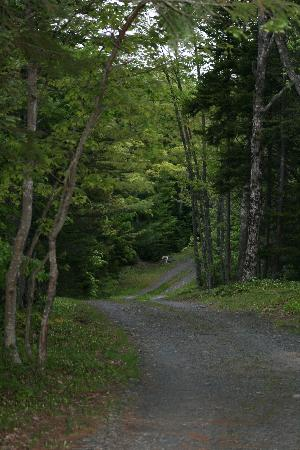 Mountain Top Cottages & Campground : Another part of the trail