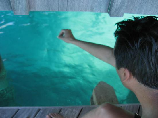 Feeding the fish from our overwater bungalow picture of for Bora bora fish