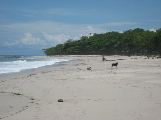 Florblanca Resort: pretty beach in Mal Pais. Cute dogs running around.