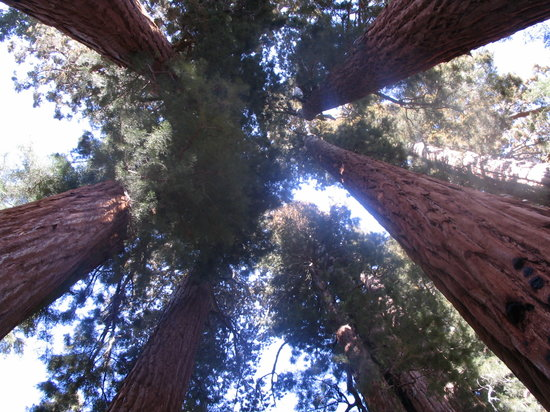 Parc national de Sequoia and Kings Canyon, Californie : Looking up from inside the Senate Group