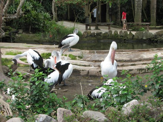 Nusa Dua, Indonesia: bird park