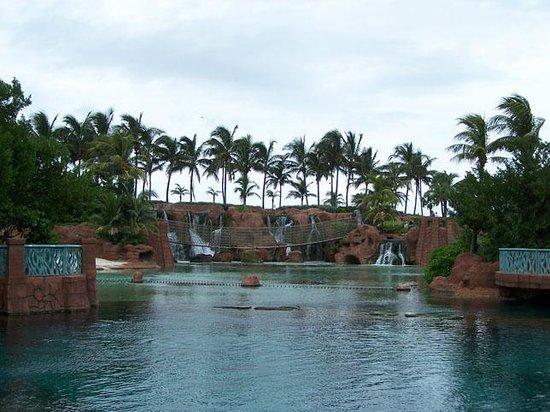 Marine Habitat at Atlantis: Atlantis Lagoon