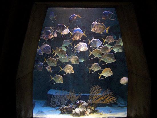 写真Marine Habitat at Atlantis枚