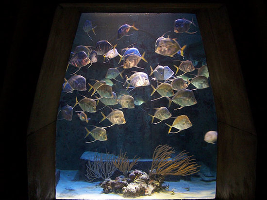 Marine Habitat at Atlantis: Mean Fishies