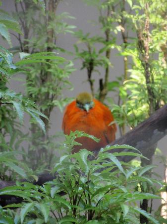 Kula Wild Adventure Park: More Birds