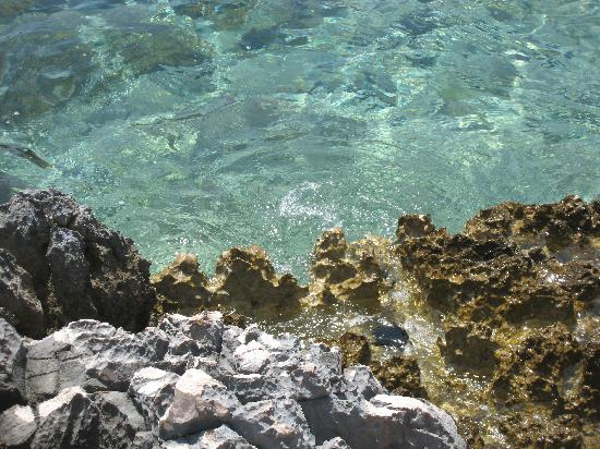 Palmizana: Crystal clear sea