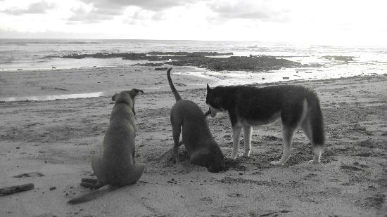 Zopilote Surfcamp: Camp dogs