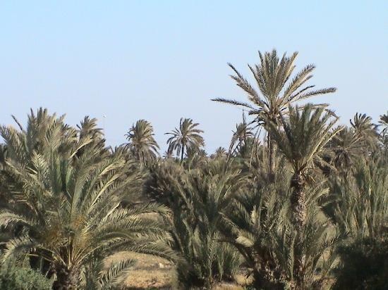 Iberostar Mehari Djerba: jardin vu de notre chambre 6107