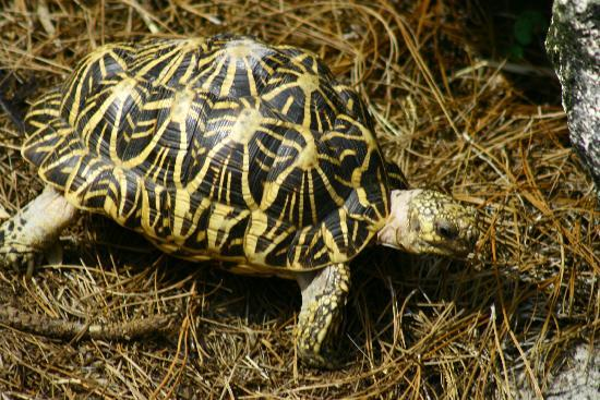 Tampa's Lowry Park Zoo: A box turtle